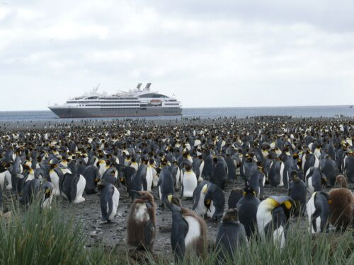 Several penguins in a grassy area in front of an ocean with a large white ship.