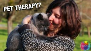 Pet Theraphy Thumbnail