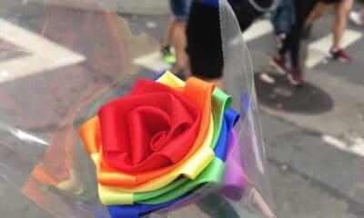 A rainbow cloth rose
