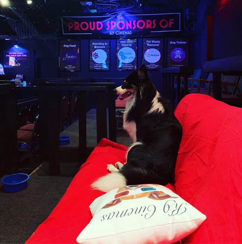 K9 Cinemas has created a magic environment that is bringing dogs and their owners together to form stronger bonds and build a community of dog lovers.