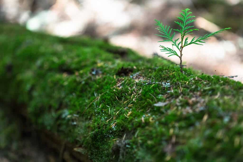 A mossy log with a small plant growing out of it.