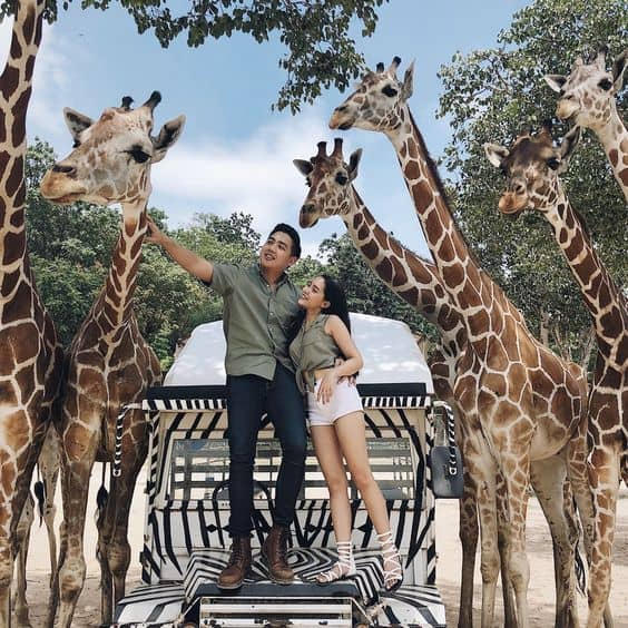 A couple in the middle of a group of giraffes