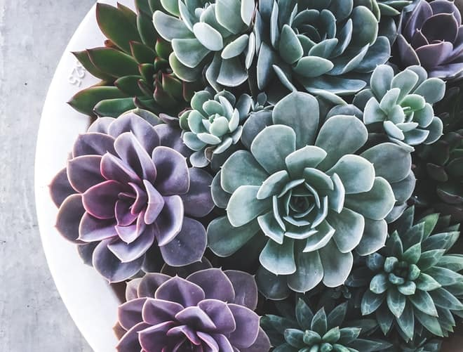A picture of plants
