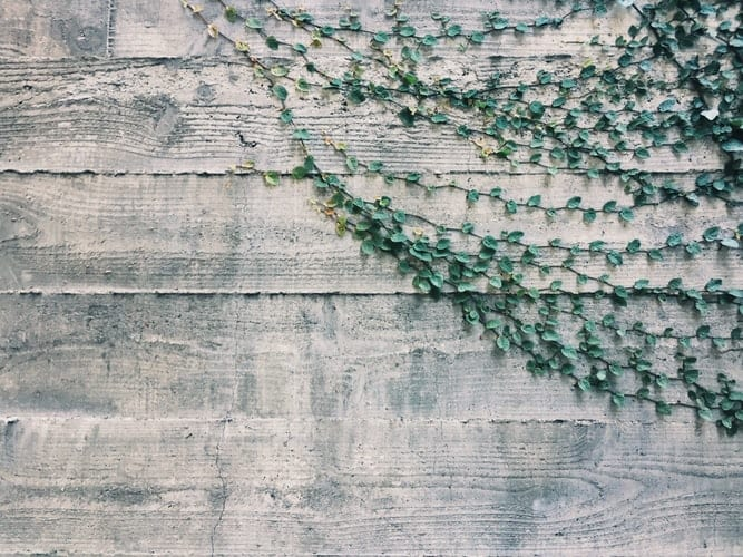 Green plants on a wooden wall