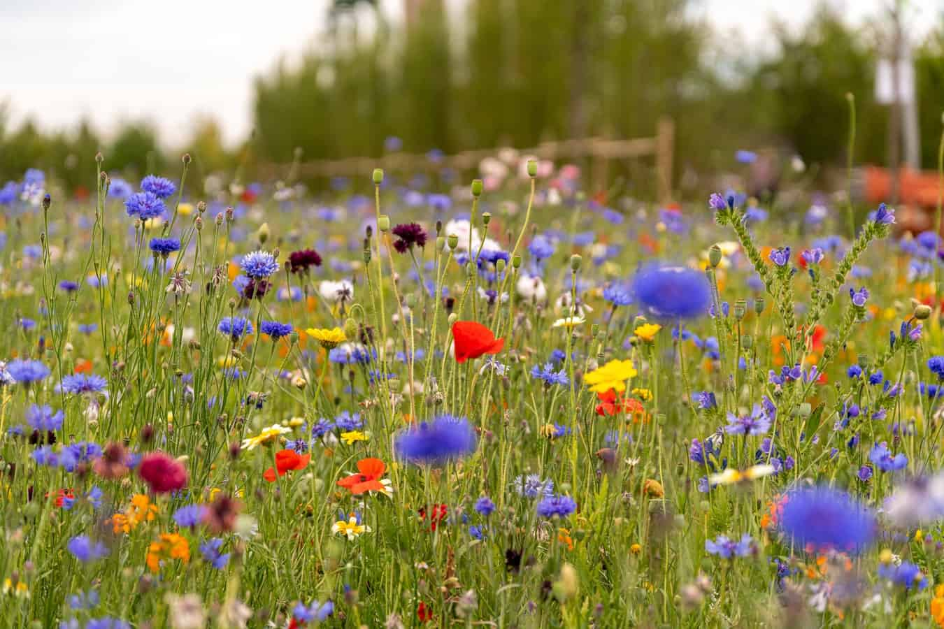 flowers of all colors and grass in a field
