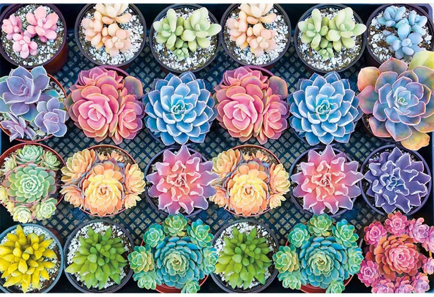 Jigsaw Puzzle 1000 Pieces for Adults Brain IQ Developing Magical Game (Succulent Plants Jigsaw Puzzle)