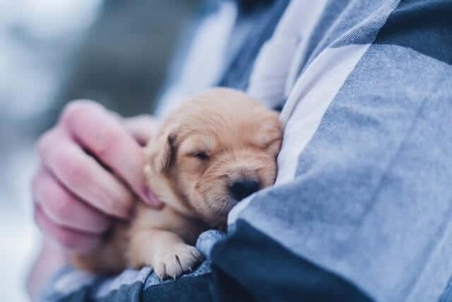 a person holding a gold puppy in their arms
