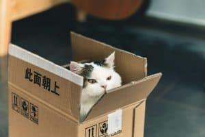 A cat in a box sent to a best friend